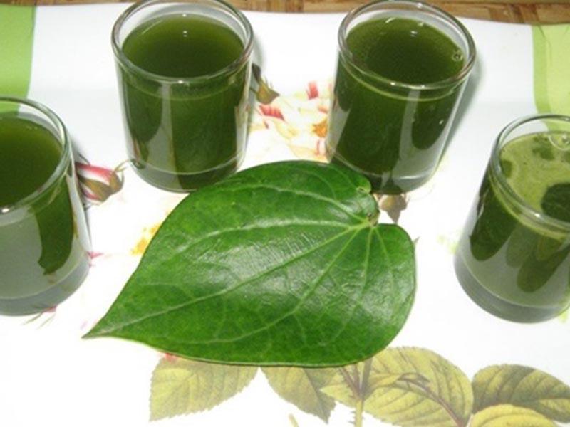 Uống nước lá lốt mỗi ngày giúp cải thiện sinh lý nam