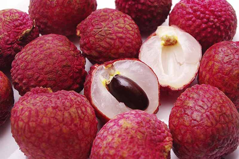 Quả vải là trái cây phổ biến vào mùa hè ở miền Bắc