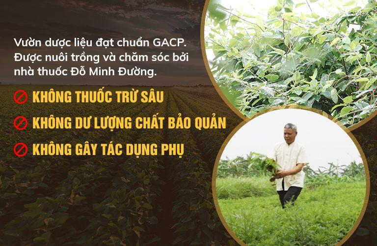 Cam kết sử dụng thoải dược sạch, đạt tiêu chuẩn GACP-WHO